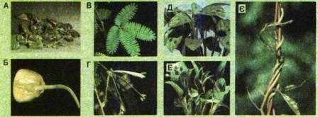 Реакції рослин на подразнення